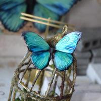 蝶のマグネット メネラウスモルフォ EMERALD PLUS 2Ssize