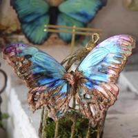 蝶のマグネット メネラウスモルフォ Turquoise腐蝕.col Msize