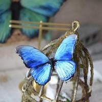 蝶のマグネット メネラウスモルフォ blue 2Ssize