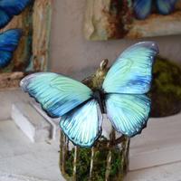 蝶のマグネット メネラウスモルフォ Emerald Msize