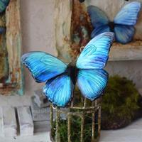 蝶のマグネット メネラウスモルフォ turquoise plus.col Msize