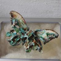メネラウスモルフォのオブジェ 腐蝕鉱石2019ex.col Msize