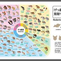 げっ歯目見取り図(A2ポスター)【りすマニア】