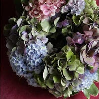 6月限定 紫陽花のテーブルリース