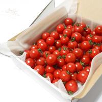 濃甘フルーツトマト「太陽のたまもの MINI」コンパクトBOX
