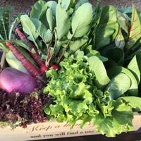 野菜セット Mサイズ