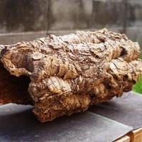 バージンコルク カヌー(40cm)