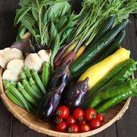 池農園 能登野菜おまかせセットと、石川.能登の乾物セット【4,000円】