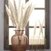 パンパスグラス ドライフラワー 花材 花資材 壁掛け 玄関に おしゃれ インテリア