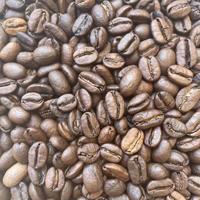 エチオピア ゲイシャG-3 ナチュラル ゲレナ農園|中深煎り|コーヒー豆150g or ドリップバッグ6袋