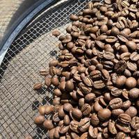 ニカラグアSHG キータスウエノス農園|中煎り|コーヒー豆100g or ドリップバッグ5袋