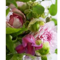 【定期便】セレクト花材の定期便 Petit
