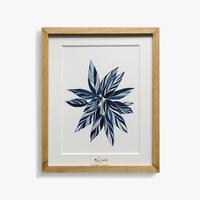 Watery 「Stromanthe triostar」
