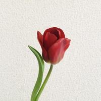 清丸さん、お誕生日おめでとうございます。