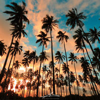 Kauai Palm Trees Mat Print A3