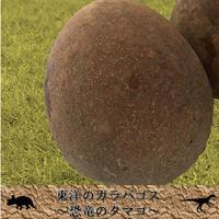 ~東洋のガラパゴス~ 恐竜のタマゴ1kg(マンゴー)