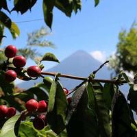 グァテマラ ラ・ホヤ農園 200g