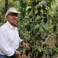 グァテマラ ラ・ホヤ農園 100g