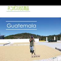 グァテマラ ラ・トラベシア農園 シティロースト 100g