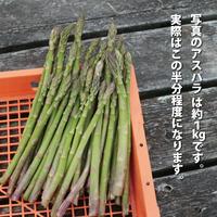 無農薬アスパラガス 500g (送料込み)