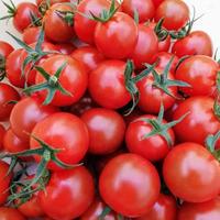 ベジフルミニトマト(4kg)