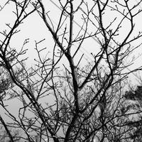 JULIE's Photo Monochrome-7