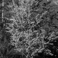 JULIE's Photo Monochrome-39
