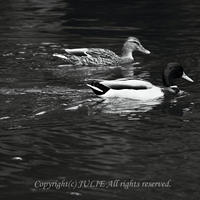 JULIE's Photo Monochrome-205