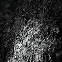 JULIE's Photo Monochrome-29