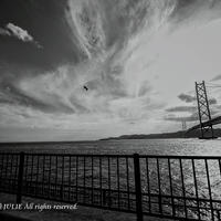 JULIE's Photo Monochrome-80