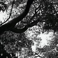 JULIE's Photo Monochrome-38