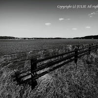 JULIE's Photo Monochrome-117