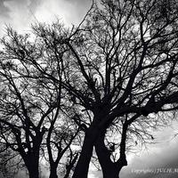 JULIE's Photo Monochrome-266