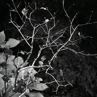 JULIE's Photo Monochrome-19