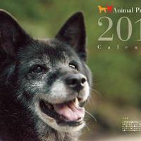 高額ご支援用 2019 アニプロオリジナル チャリティーカレンダー (寄付金込み)