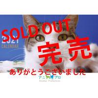 2021アニプロオリジナル 猫 チャリティー週めくりカレンダー  ポストカードサイズ 限定100冊!