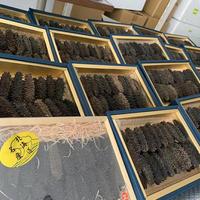 【世界一の品質】北海道産乾燥ナマコ 品質A サイズL L L 約75個 約1キロ