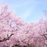 【リサーチレポート】販促担当者にきく 春の販促訴求コピー