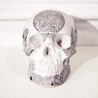 石膏の骸骨