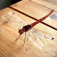 Red dragonfly/赤トンボ