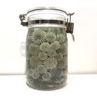 "Lab bottle plants""echinops"" 1,000ml"