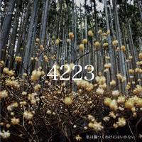 CD 4223/私は傷つくわけにはいかない