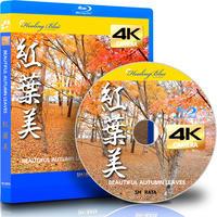 4Kカメラ映像【HealingBlueヒーリングブルー】紅葉美 BEAUTIFUL AUTUMN LEAVES