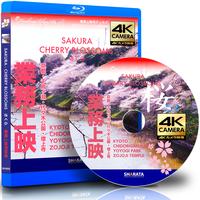 業務上映用4Kカメラ映像【Healing Blue Air BヒーリングブルーB】さくら〈動画約95分 approx95min.〉感動の4Kカメラ動画・映像