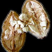 バオバブオイル100mL (Baobab oil)