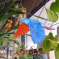 青い鳥とあなたと(舞い降りる)