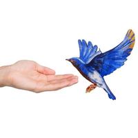 青い鳥とあなたと(飛ぶ)