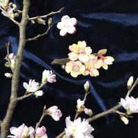 「花見しながら桜を描こう」