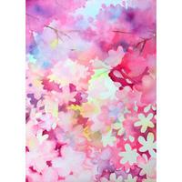 曽谷  朝絵   Asae Soya  /  桜  Cherry blossoms