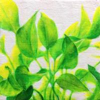 布谷文明 / leaf